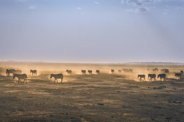 Unsplash / Kenya /  Jordi Fernandez