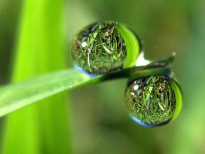 Water droplet. Photo: Flickr/Evan Leeson