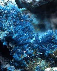 Langite crystals © M.P. Cooper