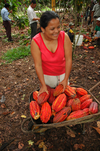 In Ecuador, a woman harvests cocoa beans that will be processed into chocolate. © Satre Comunicaciones / USAID