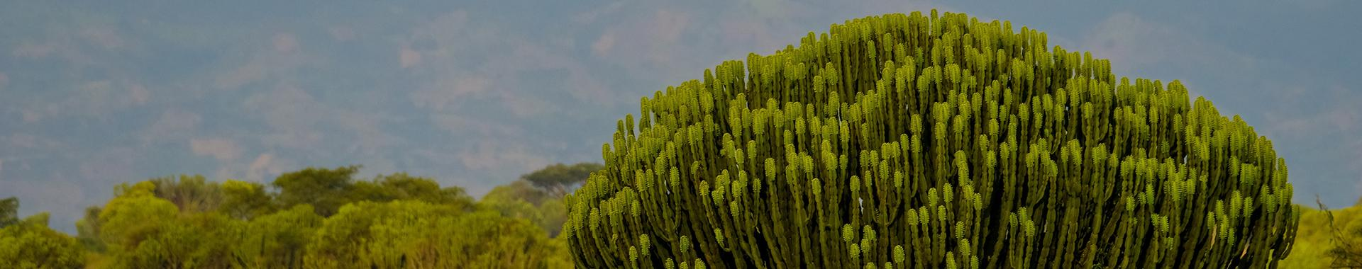 Cactus. Photo by Francesco Ungaro on Unsplash